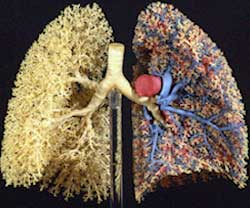 Lungs Care Centre, Noida